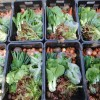 Order a box of organic vegetables